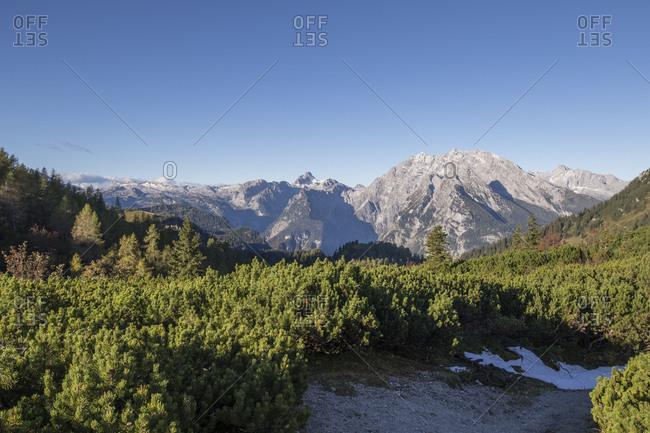 Green alpine forest in Berchtesgaden National Park with Watzmann Glacier in background