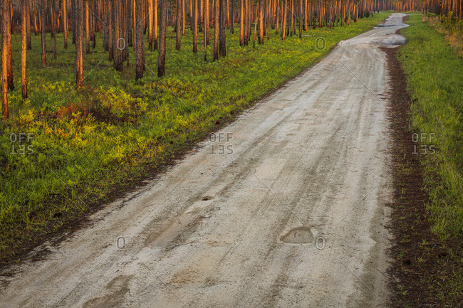 Dirt road in the Croatan National Forest, Bogue, North Carolina