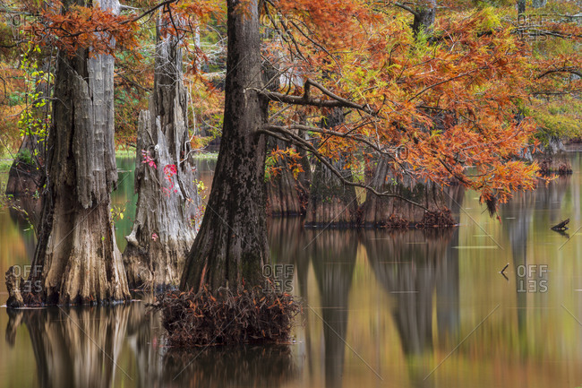 Long exposure of fall color, cypress trees, reflections, and smooth water that still shows some motion from LeFleur's Bluff State Park outside of Jackson, Mississippi