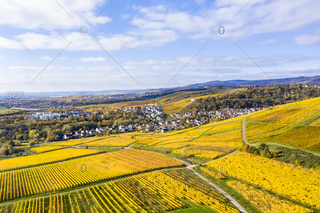 Germany- Hesse- Martinsthal- Helicopter view of yellow countryside vineyards in autumn