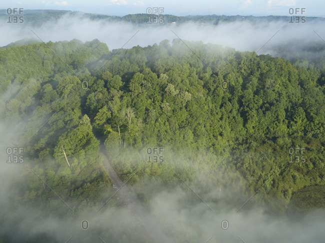 Aerial view of green forest shrouded in low clouds