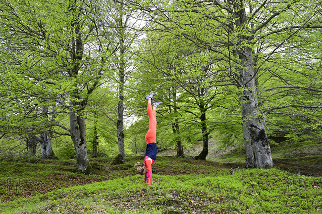 Dedicated woman practicing handstand in beech forest