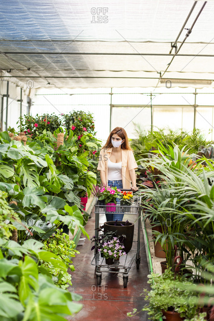 Female entrepreneur wearing face mask collecting flower while standing at garden center