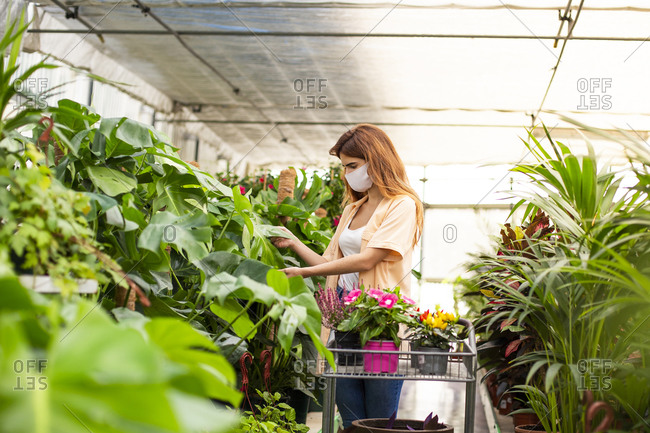 Businesswoman collecting plant on cart while standing at garden center