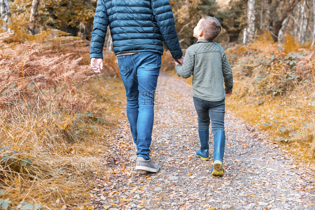 Low section of father holding hands of son while walking in Cannock Chase park during autumn
