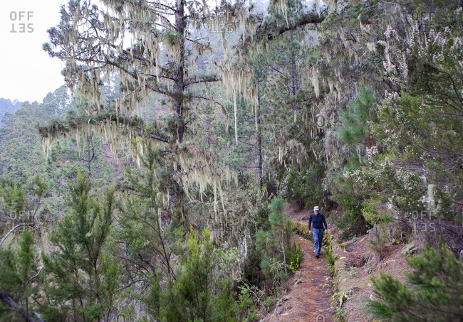Hiker hiking on mountain trail in forest at Barranco Madre del Agua- Tenerife- Spain