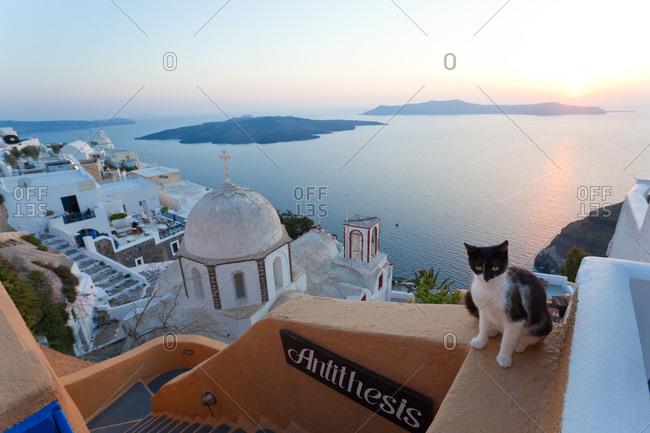 Cat, church and Fira town at sunset, Fira, Santorini, Cyclades Islands, Greece