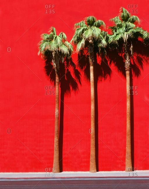 Palm trees in front of a red wall in Las Vegas, Nevada
