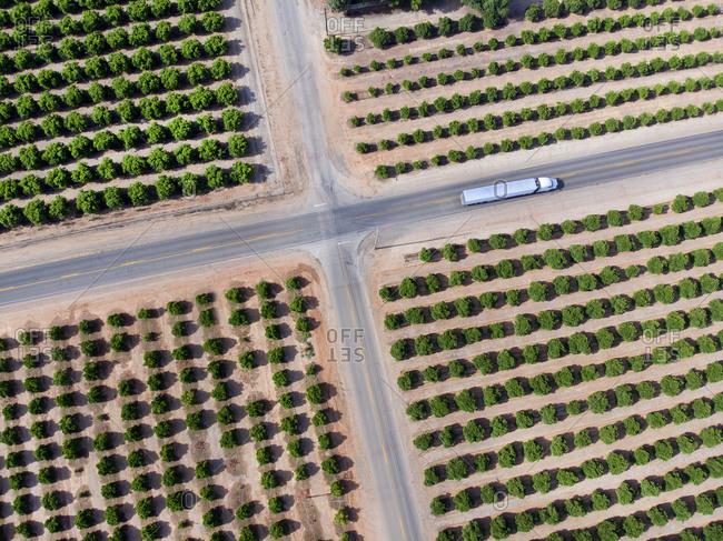 Orange groves surrounding country intersection with a semi trailer truck, Yuba City, California