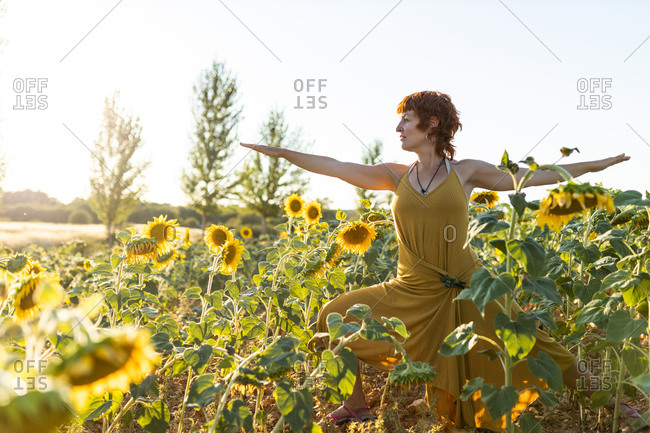 Serene female in dress standing in Virabhadrasana in blossoming sunflower field while doing yoga and looking away