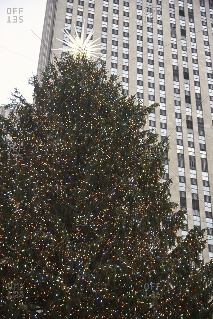 From below of huge Christmas tree decorated with illuminated star and garlands placed on street in New York