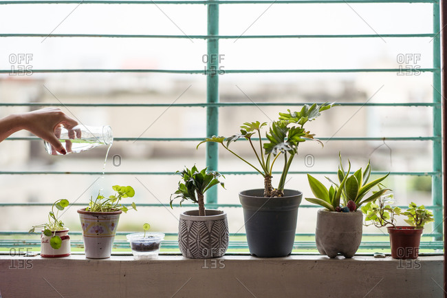 Cropped unrecognizable hand of female with glass jar watering green potted houseplants placed on windowsill at home