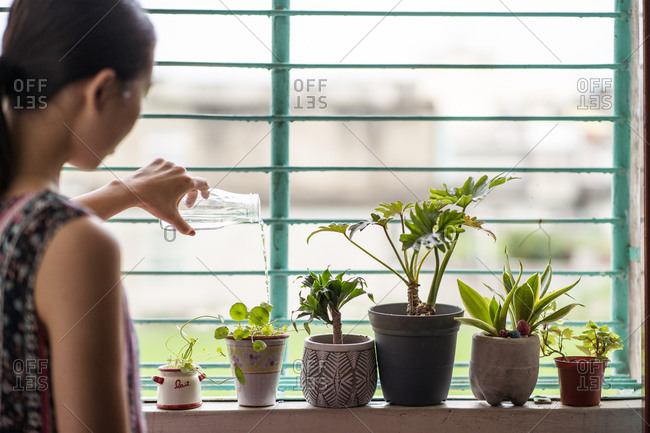 Side view of young Asian female with glass jar watering green potted houseplants placed on windowsill at home