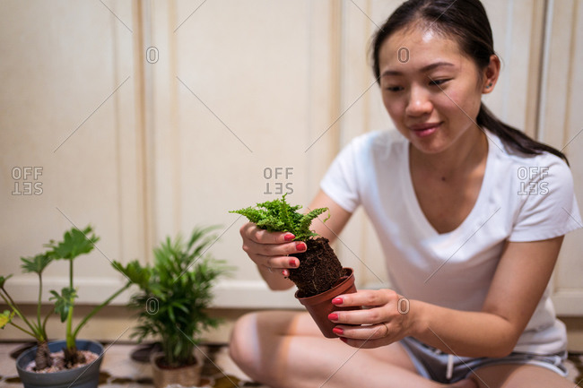 Positive young Asian female transplanting green fern stems into ceramic pot while enjoying hobby and taking care of houseplants at home