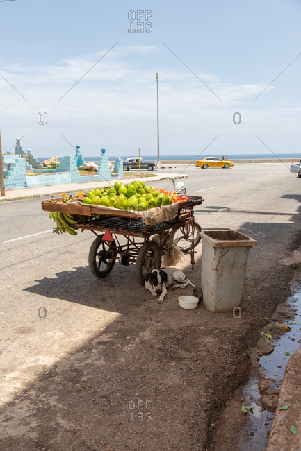 Dog sleeping near cart with tropical fruits for sale on roadside near urban waterfront in Cuba