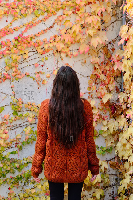 Back view of unrecognizable lonely long haired brunette in red knitted sweater standing against concrete wall covered by colorful ivy plants in autumn day
