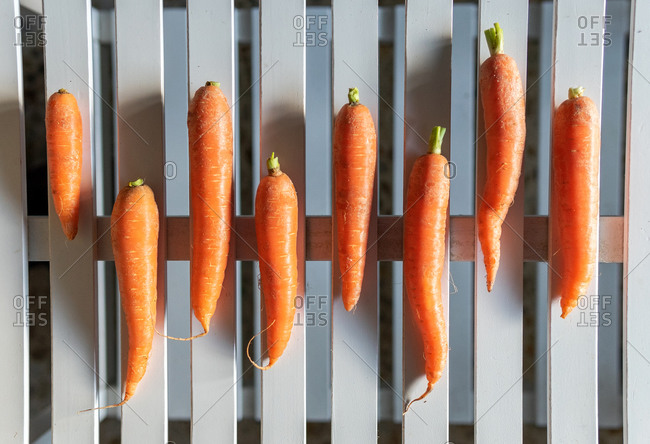 Top view of fresh natural bio organic carrots arranged on white wooden plank background