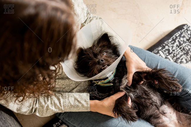 From above female owner caressing cute dog in Elizabethan collar while lying on bed on floor in cozy room and looking at each other