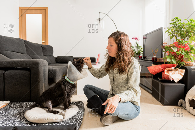Side view female giving pill for cute fluffy dog in pet cone sitting in living room at home