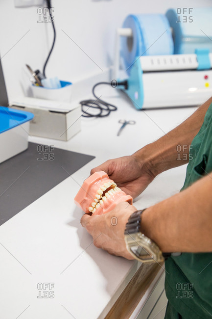 Cropped unrecognizable dentist holding dental cast in dentistry laboratory