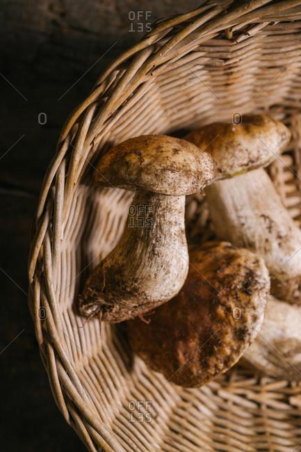 Top view of fresh whole edible porcini mushrooms or Boletus edulis in wicker basket