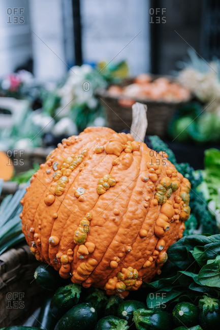 Closeup of fresh orange warty bumpy pumpkin placed on heap of green vegetables on stall of farmers market during harvesting season