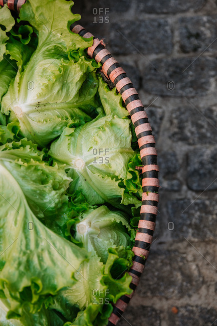 Top view of basket with heap of fresh organic green iceberg lettuce placed on stony ground on agricultural market