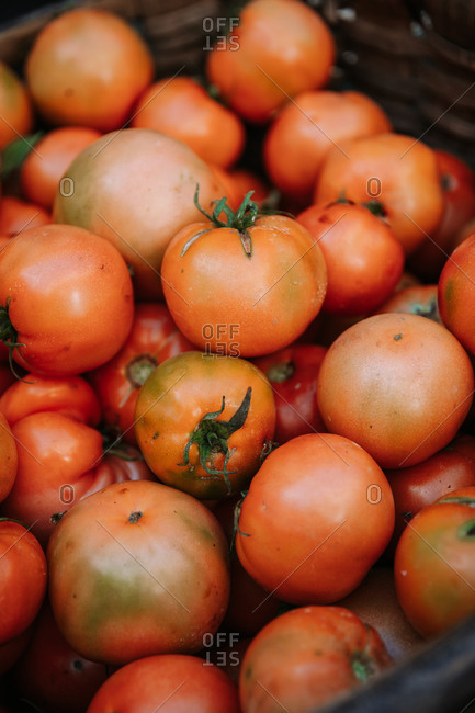 From above of wicker basket full of freshly harvested aromatic natural red tomatoes on farmers market