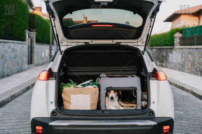 Pet dog in travel bag placed near paper package with fresh vegetables in open trunk of car parked near country house