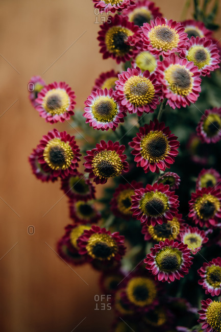Bouquet of delicate red and yellow chrysanthemum flowers on wooden background in studio