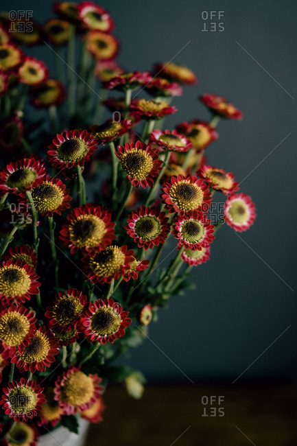 Bouquet of delicate red and yellow chrysanthemum flowers on dark background in studio