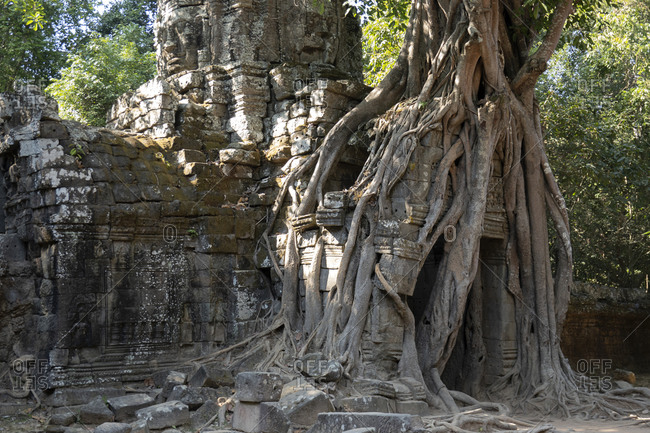 Tree roots arching over a doorway of the Ta Som temple
