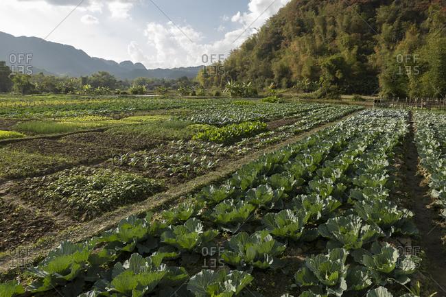 Communal vegetable gardens in Vietnam