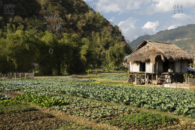 Vietnam, Asia - December 19, 2019: Small farmhouse near a large vegetable garden