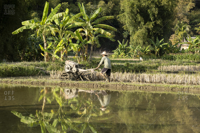 A man ploughing a rice paddy