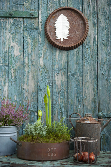 Plants growing in metal pots in front of old wooden wall with peeling off paint