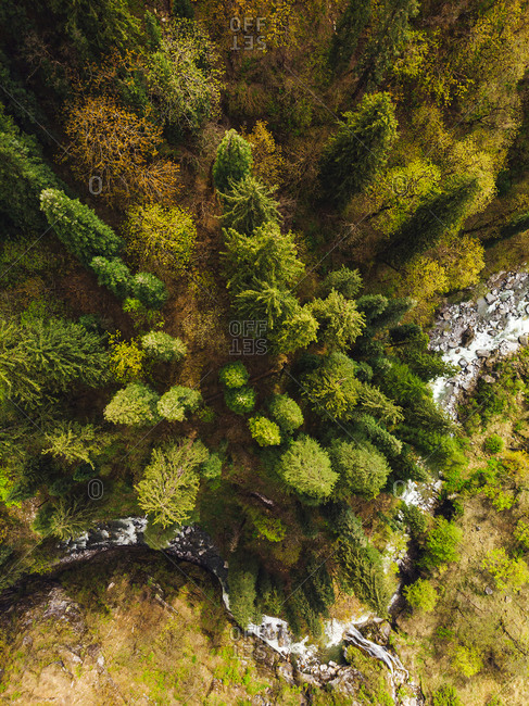 Drone view of clear stream flowing through alpine forest in autumn