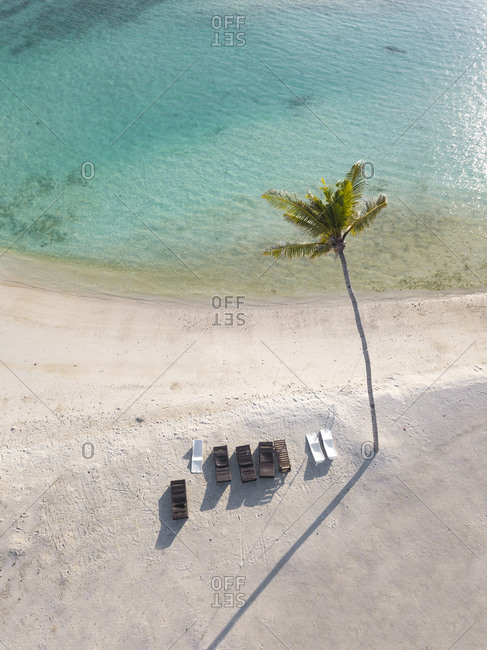 Single palm tree and sun loungers on tropical island- aerial view