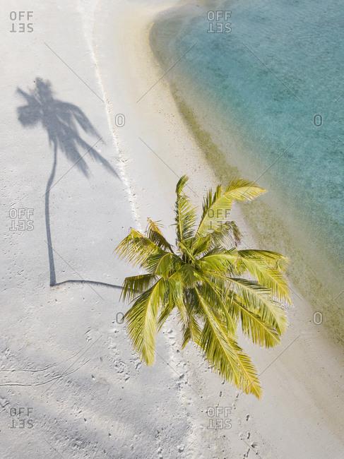 Single palm tree on tropical island- aerial view