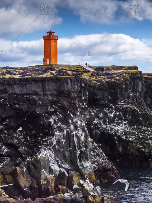 Seagulls flying in front of steep coastal cliff with Svortuloft Lighthouse in background- Iceland