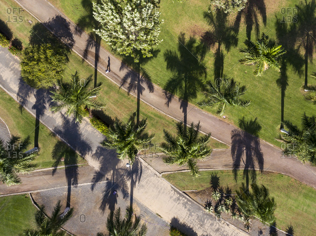 Person walking across the park with the palm trees