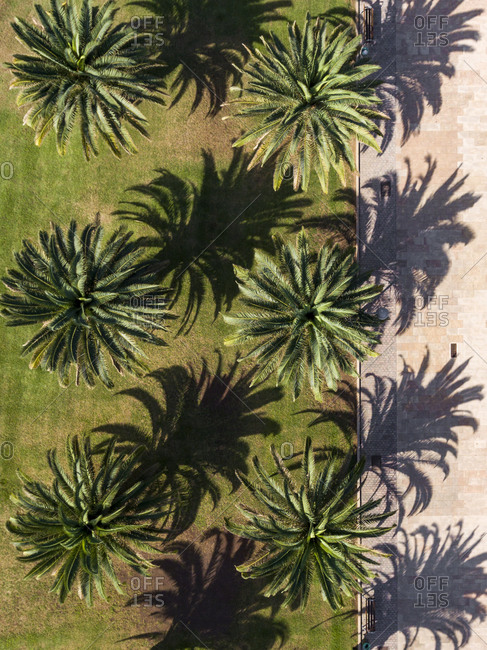 Row of green palm trees in the park viewed from above