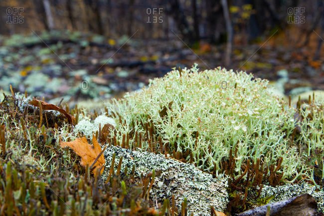 Close up of winter plants growing in the wild