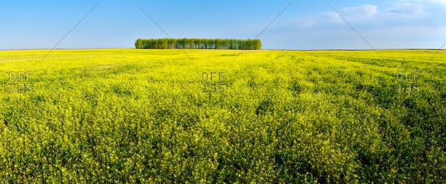 Sanjiang farmland in the summer