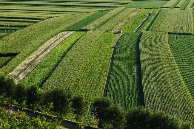 Sanjiang county farmland in the summer