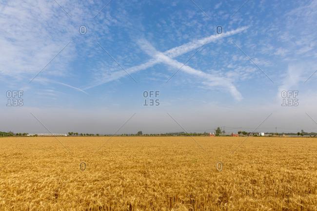Jiangsu province fields under blue sky