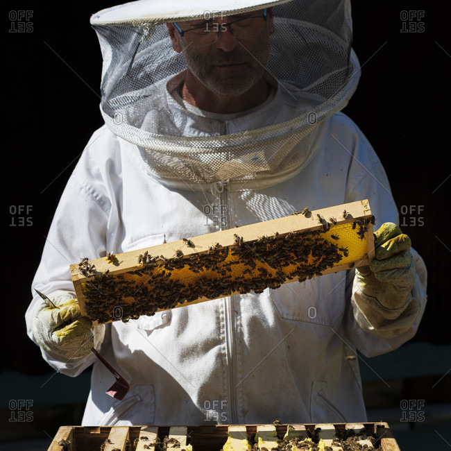 June 1, 2020: A beekeeping on the edge of the forest: everyday life of a beekeeper. The stick chisel with honeycomb lifter is one of the most needed tools in beekeeping