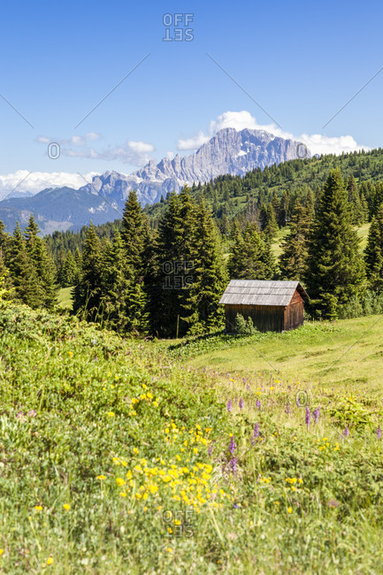 Lonely hut in the meadows and the woods of Mount Cherz, in the background the Civetta north west  wall, Livinallongo del Col di Lana, Belluno, Dolomites, Veneto, Italy