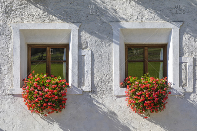 Window with Geraniums (Pelargonium sp.) on a facade of an old building in South Tyrol, Rasen-Antholz, Bolzano, Italy