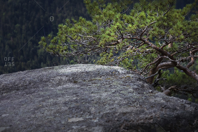 Rocks, Forest, Adventure, Stone, Zen, Europe, Germany, Black Forest, Triberg, Gremmelsbach, Schlossfelsen,